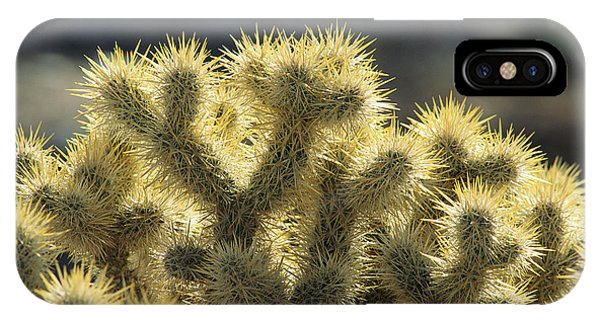 Teddy Bear Cholla iPhone Case - Sunrise On Teddy Bear Cholla Optunia by Rich Reid