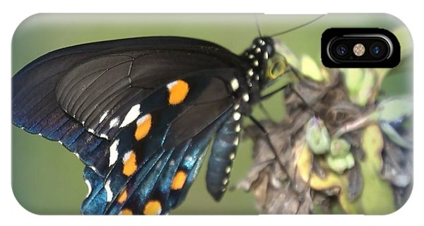 IPhone Case featuring the photograph Swallowtail 1 by Judy Hall-Folde
