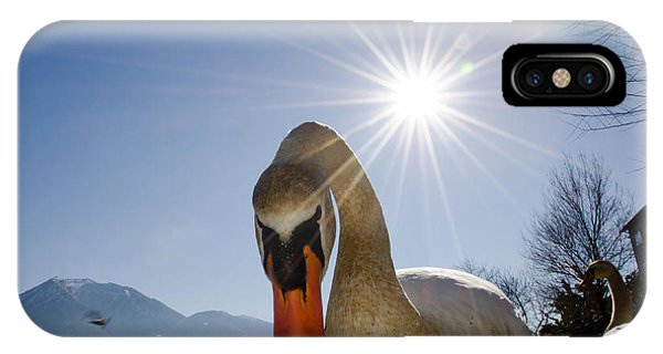 Swan Saying Hello IPhone Case