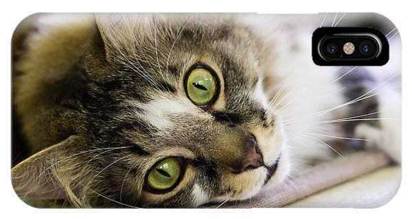 Tabby Cat Looking At Camera IPhone Case