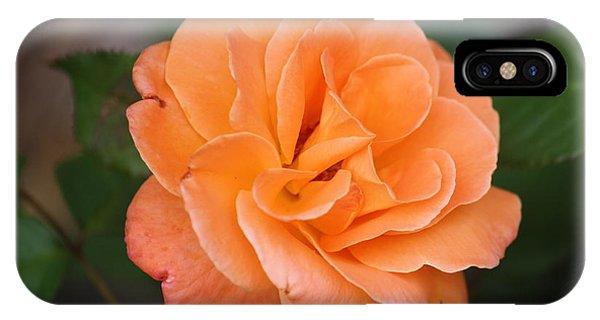 Tangerine Rose IPhone Case