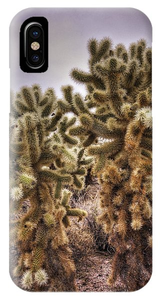 Teddy Bear Cholla iPhone Case - Teddy Bear Cholla  by Saija  Lehtonen