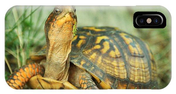 Terrapene Carolina Eastern Box Turtle IPhone Case