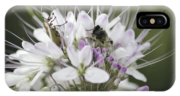 The Beetle And The Bee IPhone Case