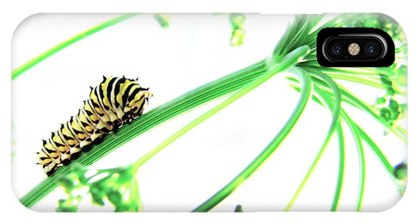 Caterpillar iPhone Case - The Dill Express by Amy Tyler