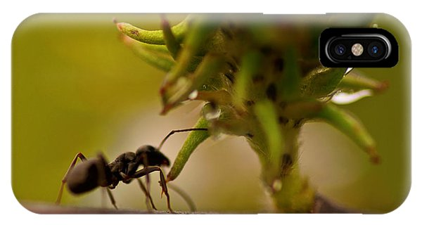 Ant iPhone Case - The Harvester by Susan Capuano