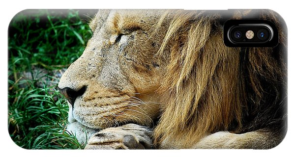 The Lions Sleeps IPhone Case