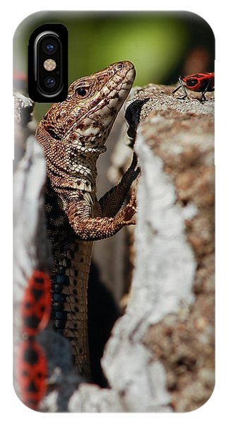 IPhone Case featuring the photograph the random Lizard  by Stwayne Keubrick