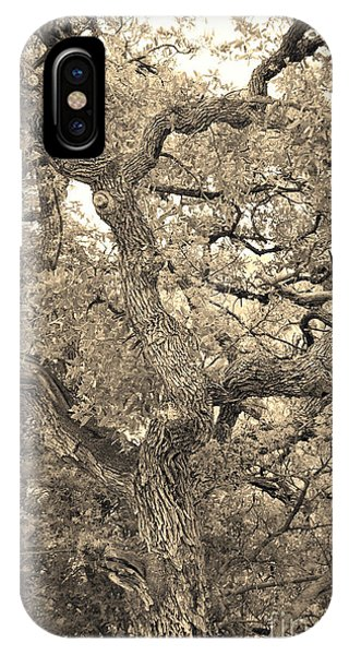 The Wicked Tree IPhone Case