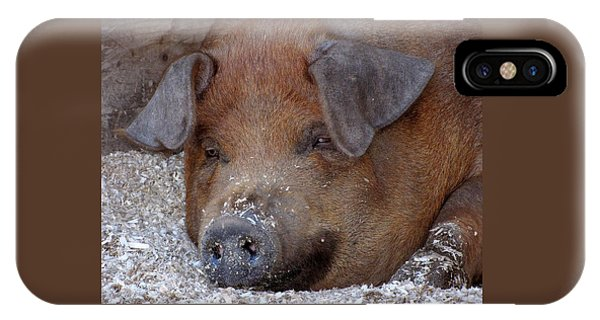 This Little Piggy Took A Nap IPhone Case
