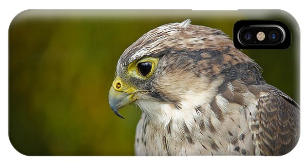 Thoughtful Kestrel IPhone Case
