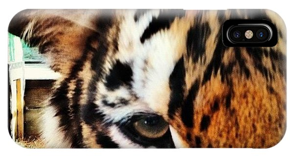 Cool iPhone Case - Tiger by Lea Ward