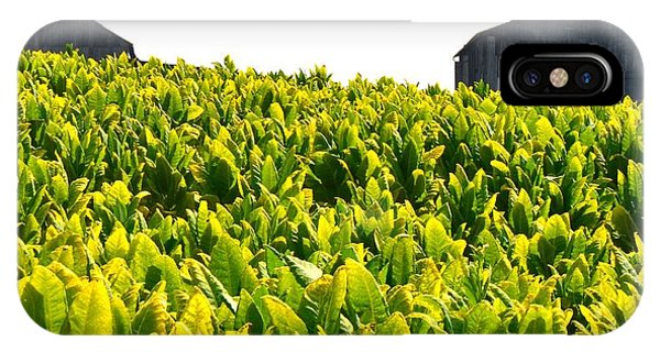 Tobacco Farm Phone Case by Mark Bowmer