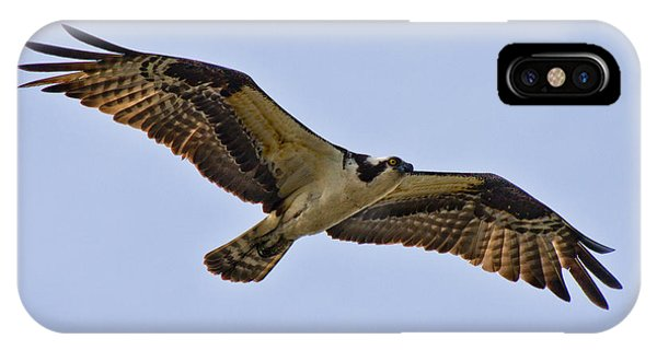 Ospreys iPhone Case - Topsail Osprey by Betsy Knapp