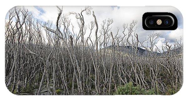 Wilsons Promontory iPhone Case - Tree Cemetery by Douglas Barnard
