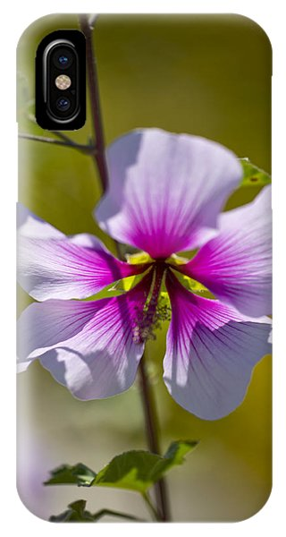 Tree Mallow (lavatera Maritima) Phone Case by Dr Keith Wheeler