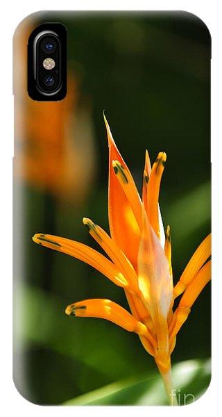 Parakeet iPhone Case - Tropical Orange Heliconia Flower by Elena Elisseeva