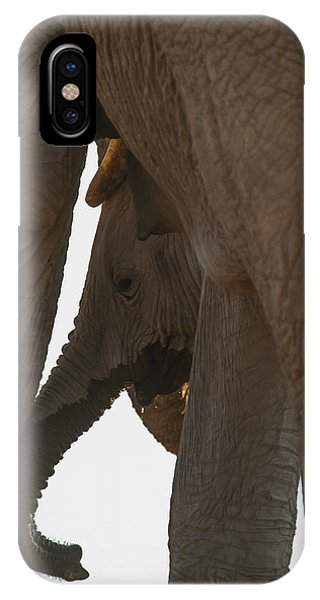Trunk Touch IPhone Case