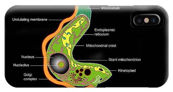Wildlife Er iPhone Case - Trypanosome Protozoan, Artwork by Francis Leroy, Biocosmos