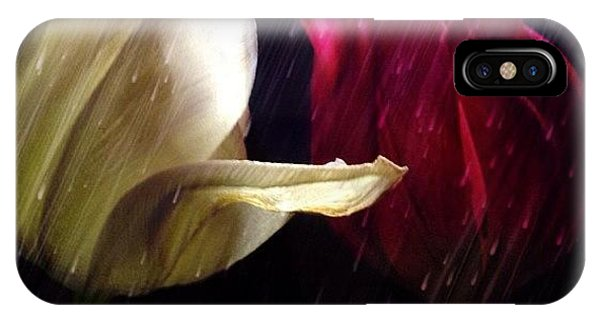 Instagram iPhone Case - Tulips In The Rain by Paul Cutright