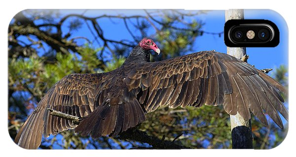 Turkey Vulture With Wings Spread IPhone Case