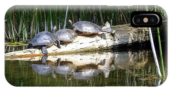 Wakulla iPhone Case - Turtle Committee Meeting by Carla Parris