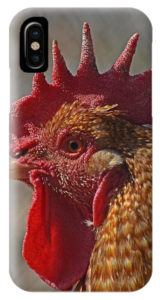 Urban Rooster IPhone Case