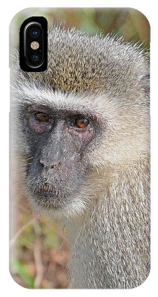 Vervet Monkey Phone Case by Jonathan Whichard