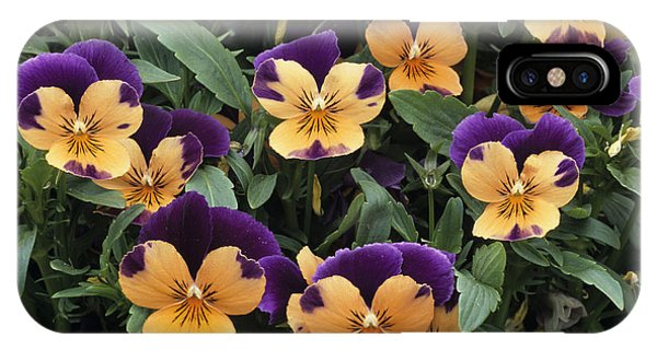 Violets Phone Case by Archie Young