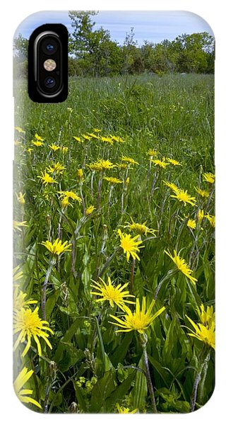Viper's-grass Phone Case by Bob Gibbons