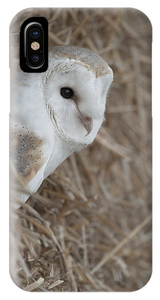 Watchfull Barn Owl IPhone Case