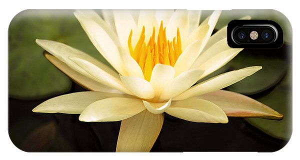 Waterlily iPhone Case - Water Lily by Darren Fisher