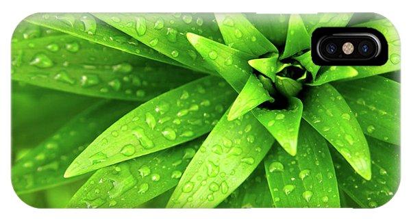 Green iPhone Case - Wet Foliage by Carlos Caetano