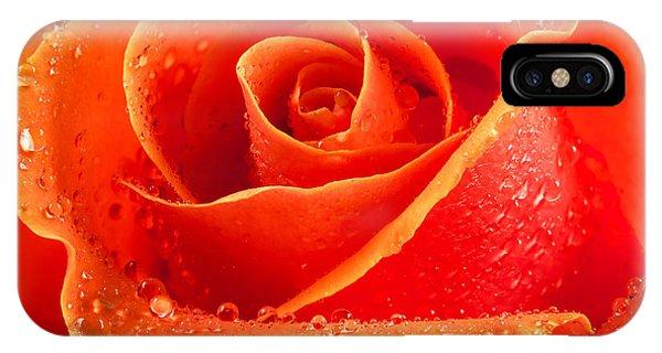 Wet Rose IPhone Case