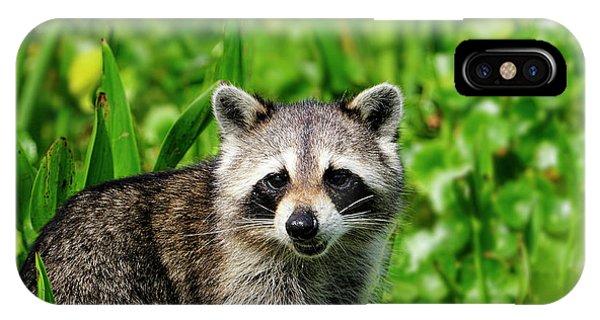 Wetlands Racoon Bandit IPhone Case