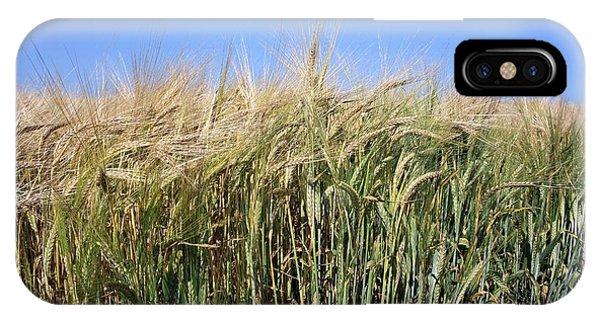Wheat Field (triticum Sp.) Phone Case by Victor De Schwanberg