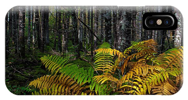 Where The Ferns Grow IPhone Case