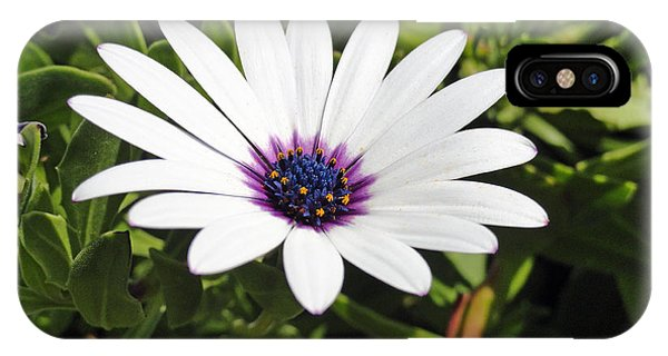 White African Daisy IPhone Case