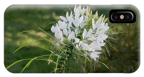 White Cleome IPhone Case