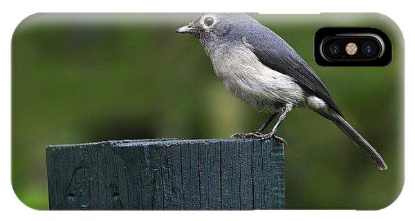 White-eyed Slaty Flycatcher IPhone Case