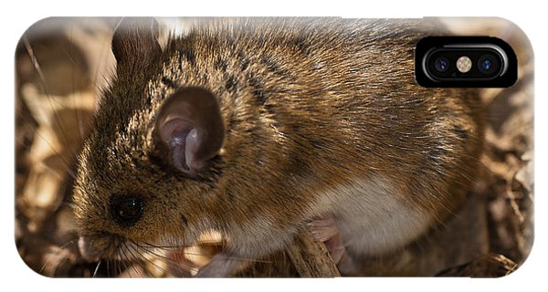 White-footed Mouse IPhone Case