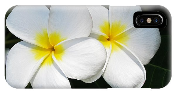 White Plumerias IPhone Case