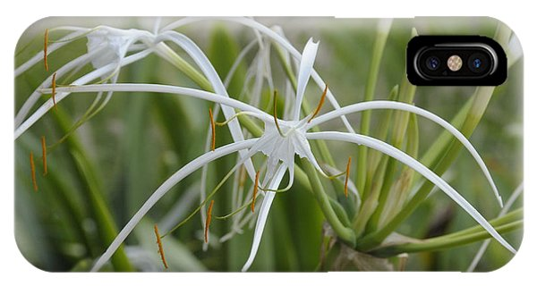 White Spider Orchid IPhone Case
