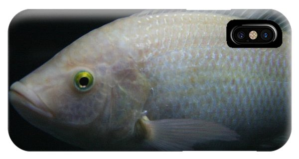 White Tilapia With Yellow Eyes IPhone Case