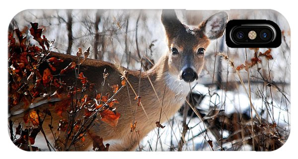 Whitetail Deer In Snow IPhone Case