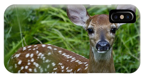 White Tailed Deer iPhone Case - Who Are You by Betsy Knapp