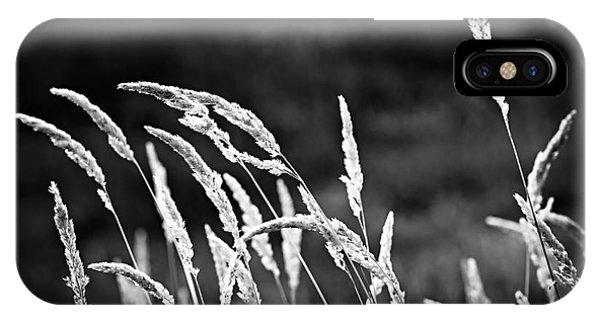 Grass iPhone Case - Wild Grass by Elena Elisseeva