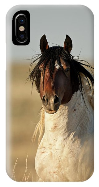 Wild Mustang Band Stallion IPhone Case