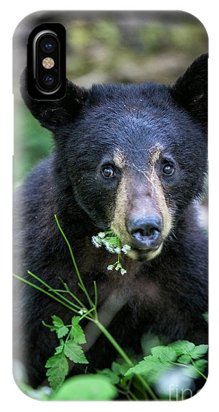 Wildflower Bear IPhone Case