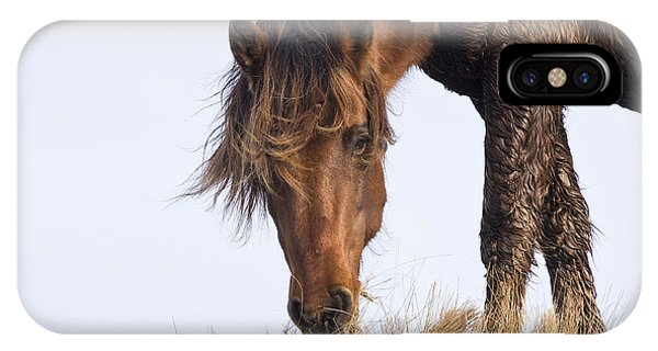 Wildhorse On The High Dunes IPhone Case